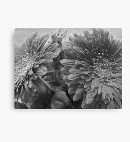 ~ Stunning Gerbera - B & W ~ Canvas Print