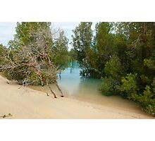 Worms eye view of Willie Creek  Photographic Print