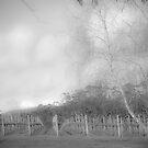 Winter Vineyard 2 in Mono by pennyswork
