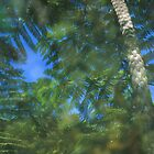 Fern Reflection by Sally McDonald