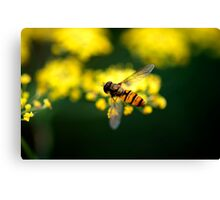 Fennel Fly Canvas Print