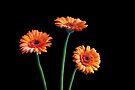 Tremendous Triune Twinklers by DonDavisUK