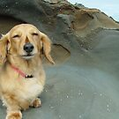 Seaside Dachshund by Ian Lea