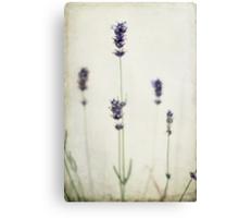 Lavender Simply Against a Plain Wall Canvas Print