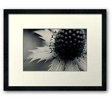 Sea Holly Framed Print