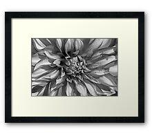 Dahlia in Black and White Framed Print