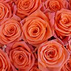 Orange Roses by BellaRosa