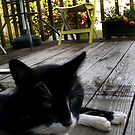 I Dig Your Deck! by hickerson