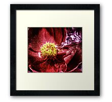 vivid red flower macro with pollen Framed Print
