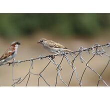 Birds Resting on a wire Photographic Print
