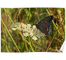 Butterfly Unknown Poster