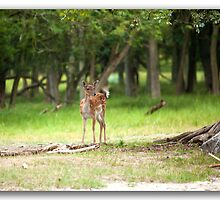 Bambi   ( See large) by John44