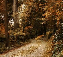 Winding Road by Jessica Jenney