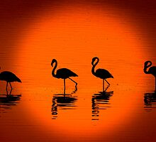 Flamingos at Sunset, Nakuru National Park, Kenya. Africa. by PhotosEcosse