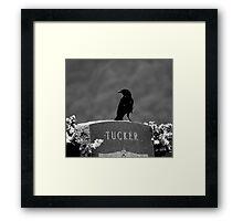 Tucker's Raven Framed Print