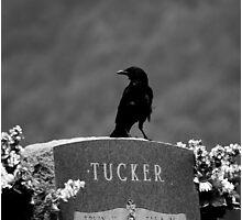 Tucker's Raven Photographic Print