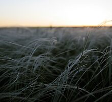 Silver Steppe by elthar