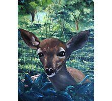 The Fawn Photographic Print
