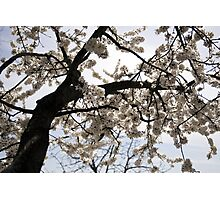 Spring shines Photographic Print