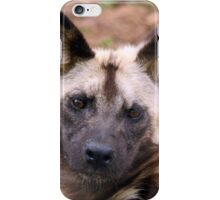 African Painted Dog iPhone Case/Skin