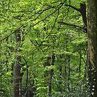 woods are good by kurtmansfield