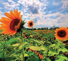 Field Of Dreams by Dennis Giacobe
