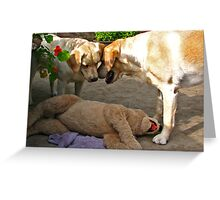 Do you think it's sleeping? Greeting Card