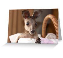 Orphan Kangaroo, a joey, being raised by me Greeting Card