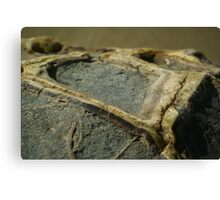 Moeraki boulder Canvas Print