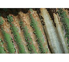 Weathered corrugations Photographic Print