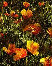 Poppies Will Make Them Sleep by RC deWinter