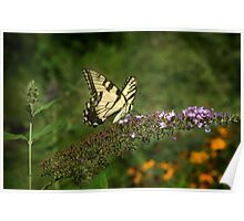 Tiger Swallowtail in the Museum Garden Poster