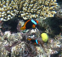A Nemo Ne by photochunk