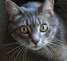 Portrait of a Cat by Luke Prudence