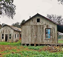 Abandoned Home in the Santa Ynez Valley by Martha Sherman