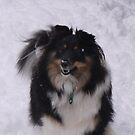 Winter Pup by Lollipop