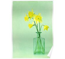 Dreamy Daffodils Poster