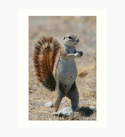 Got Nuts? - Cape Ground Squirrel Art Print