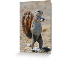 Got Nuts? - Cape Ground Squirrel Greeting Card