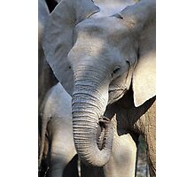 Lower Zambezi Baby Elephant Photographic Print