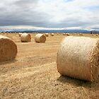 Hay Bales, North East Tasmania, Australia by Michael Boniwell