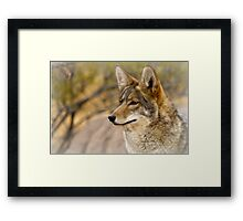 Keen Eyes Framed Print