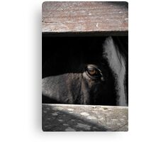 Pistol spy Canvas Print