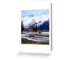 Wildlife Near Portage, Alaska Greeting Card