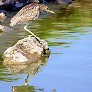 Crouching Heron, Hidden Turtle by Sandra Moore