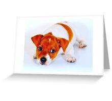 Chi hua hua puppy Greeting Card