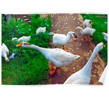 Geese Poster