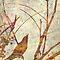 Painterly Birds