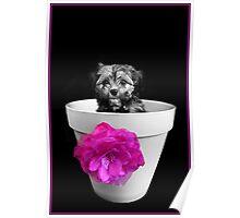 Pot Plant Puppy Poster