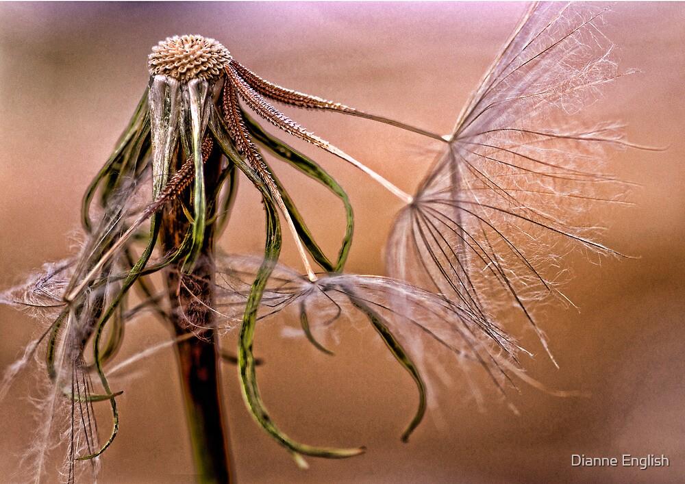 Dandelion 2 by Dianne English